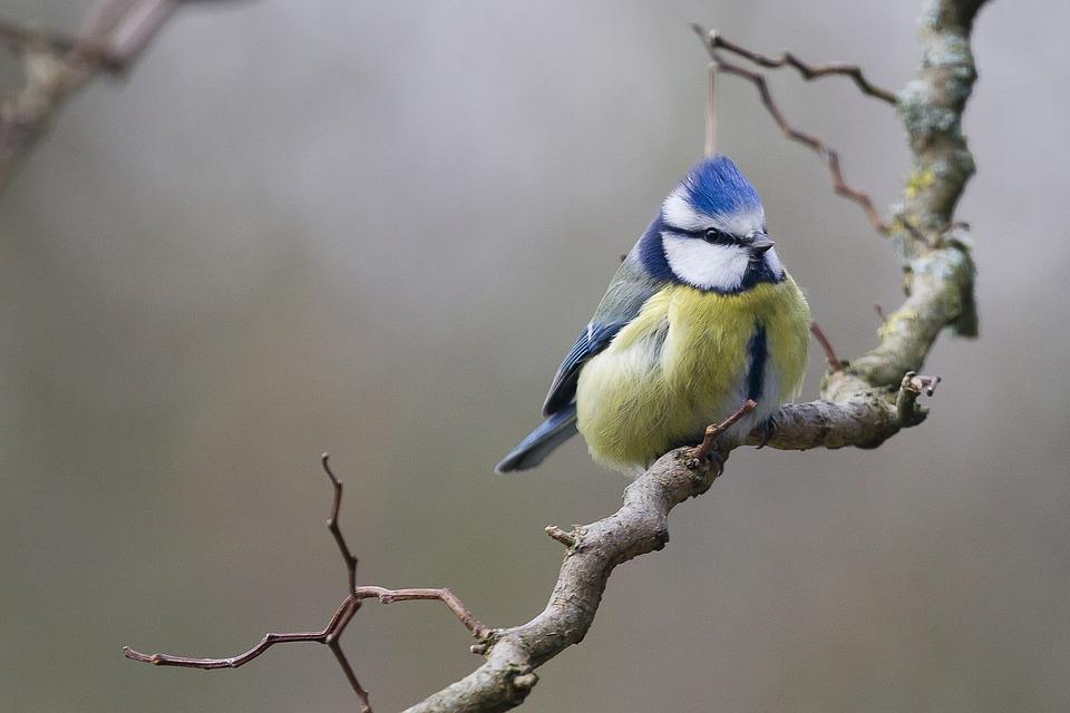 birds-1166992_960_720