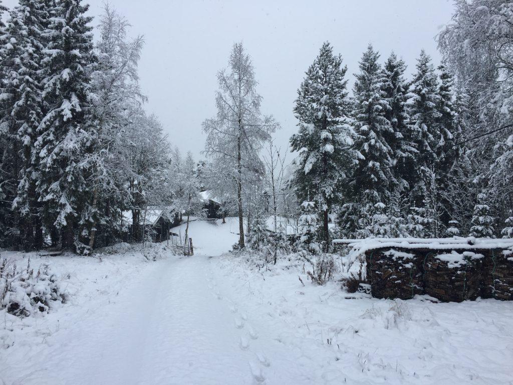 I dag gikk formiddagsturen gjennom sesongens første ordentlige snøfall.